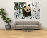 Panda Cub on Snow, Wolong, Sichuan, China Art by Keren Su