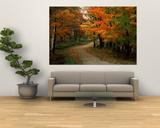 Skovvej om efteråret, Vermont, USA Plakater af Charles Sleicher