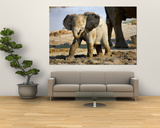 Baby African Elephant in Mud, Namibia Prints by Joe Restuccia III