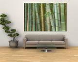 Bosque de bambú, Kioto, Japón Láminas por Rob Tilley