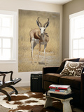 Front View of Standing Springbok, Etosha National Park, Namibia, Africa Posters by Wendy Kaveney