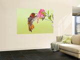 Rufous Hummingbird Feeding in a Flower Garden, British Columbia, Canada Posters by Larry Ditto