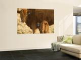 Crossbred Cow With Calf Near Choteau, Montana, USA Prints by Chuck Haney