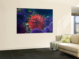 Tide Pool With Sea Urchins, Olympic Peninsula, Washington, USA Poster by Charles Sleicher