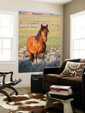 Feral Horse in the High Sagebrush Country East of Cody, Wyoming, USA Posters par Larry Ditto