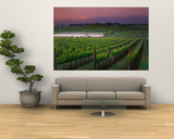 Sunrise in Distant Fog, Carnaros, Napa Valley, California, USA Print by Janis Miglavs