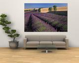 Lavender Field, Provence, France Poster by Gavriel Jecan