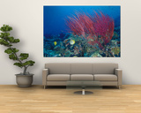 Coral Reefs, Papua, Indonesia Art by Michele Westmorland
