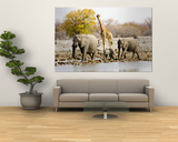 African Elephants and Giraffe at Watering Hole, Namibia Posters af Joe Restuccia III