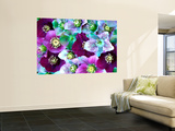 Heliborus Pattern of Winter Blooming Flower, Sammamish, Washington, USA Prints