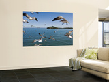 Birds Flying Along Ferry Ride Between Peninsula De Nicoya and Puntarenas. Prints by Christian Aslund