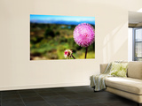 Wildflower Near Bariloche, Neuquen Print by Michael Taylor
