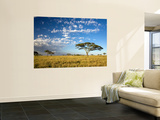 Acacia Trees under Blue Sky with Clouds Prints by Sean Caffrey