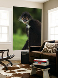 Yucatan Spider Monkey (Ateles Geoffroyi Yucatanensis), Xcaret Eco Theme Park Posters by Guylain Doyle