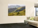 View to Serralunga D' Alba, Piedmont, Italy Kunstdrucke von Peter Adams