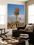 Blooming Aloe Littoralis Posters by Uros Ravbar