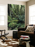 Temperate Rainforest with Ferns and Moss-Covered Tree Trunks Prints by Brent Winebrenner