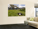 Cape Buffalo Skull and Hills of Ngorongoro Crater Poster by Douglas Steakley