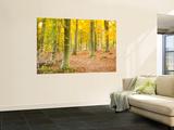 Jon Arnold - Woods in Autumn Time, Surrey, England, Uk Obrazy