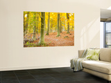 Woods in Autumn Time, Surrey, England, Uk Prints by Jon Arnold