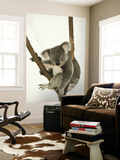 Australia, Queensland, Lone Pine Koala Sanctuary, Koala Posters by Walter Bibikow