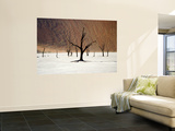 Bare Trees in Salt Plain with Sheer Hills Behind Art by Neil Setchfield