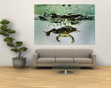Frog Jumping Into an Aquarium Poster by Gjon Mili