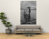 Rhesus Monkey Sitting in Water Up to His Chest Print by Hansel Mieth