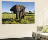 African Elephant (Loxodonta Africana Africana), Kapama Game Reserve Posters by Ariadne Van Zandbergen