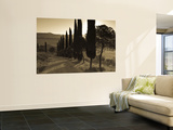 Country Road Towards Pienza, Val D' Orcia, Tuscany, Italy Posters by Doug Pearson