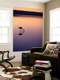 Flamingo Silhouetted at Sunset in Laguna Chaxa Prints by Michael Taylor