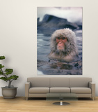 Japanese Macaque, Snow Monkey Sitting in Waters of Hot Spring in Shiga Mountains During a Snowfall Posters by Co Rentmeester