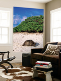 Giant Tortoise on Beach Posters by Ralph Hopkins