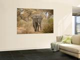 Loxodonta Africana, Lake Manyara National Park, Tanzania Posters by Ivan Vdovin