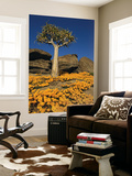 Quiver Tree (Aloe Dichotoma) and Flowering Daisies in Spring, Namaqualand Posters by Ariadne Van Zandbergen