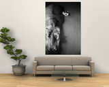 """Mother Hippo """"Bebe"""" and Her Daughter Posters by Mark Kauffman"""