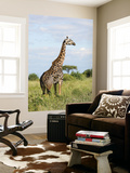 Maasai Giraffe (Giraffa Camelopardalis Tippelskirchi Posters by Ariadne Van Zandbergen