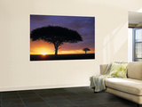 Acacia Tree at Sunrise, Serengeti National Park, Tanzania Poster par Paul Joynson-hicks