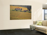 Vineyard, Greve in Chianti, Tuscany, Italy Posters af Walter Bibikow