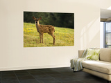 Newborn Fawn Posters by Douglas Steakley
