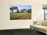 Oceanfront Driveway Prints by Paul Kennedy