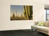 Cirio Trees and Cardon Cacti Near Catavina Kunstdrucke von Witold Skrypczak