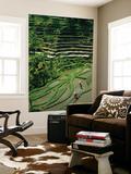 Ubud, Rice Terraces, Bali, Indonesia Prints by Steve Vidler