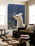 Llama (Lama Glama) Prints by Brent Winebrenner