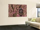 Detail of Lantern and Magnolias Blooming, City Hall Park, Lower Manhattan Poster von Michelle Bennett