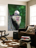 White-Faced Capuchin (Cebus Capucinus) Protects its Baby at Monkey Island Near Merida Posters by Paul Kennedy