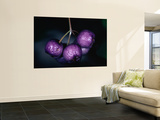 Lilly Pilly Fruit Prints by Martin Cohen