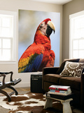 Scarlet Macaw (Ara Macao) Art by Shannon Nace
