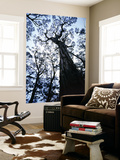 Eucalypt Trees from Below in Southeast Tasmania Prints by Rob Blakers