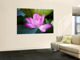 Lotus Flower Detail, West Lake Prints by Greg Elms